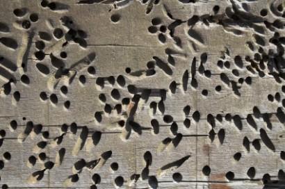 Hogyan ordít a fába szorult féreg? – avagy szólásaink eredete
