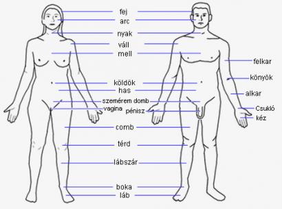 a kukoricaféreg elhelyezkedése az emberi testben