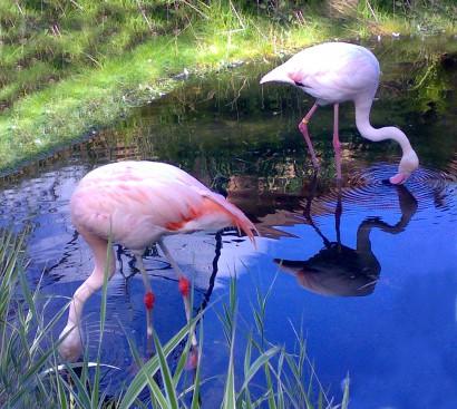 furcsa és rózsaszínű társkereső Ingyenes társkereső oldal 2014